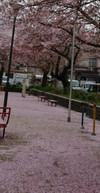 Sakura6_3